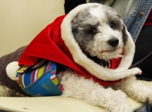 Shivers poses in a holiday scarf!