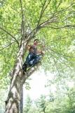 Young man climbs a tree